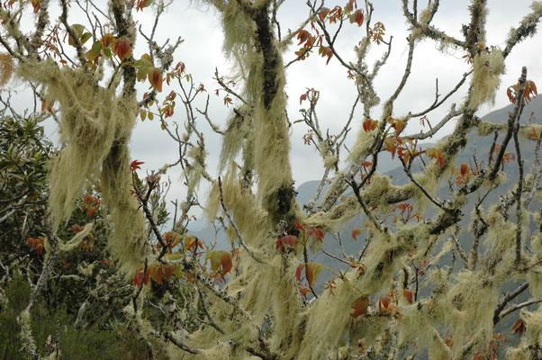 Farnbewachsener Baum