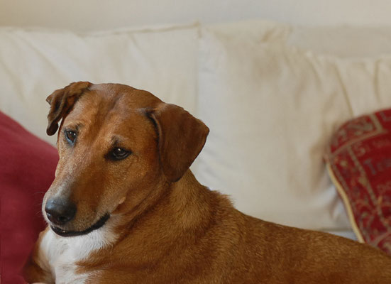 Hunde-Fotografie in Ebersberg