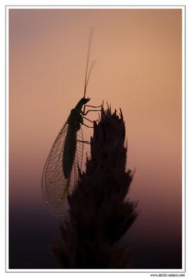 Photo Macro_108