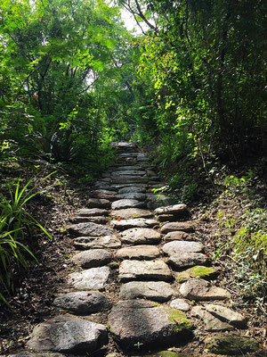 Tayrona Path - Reserva Biologica Caoba