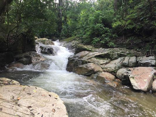 River - Reserva Biologica Caoba