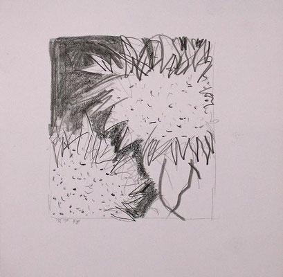 Sonnenblumen, Bleistift Auf Papier