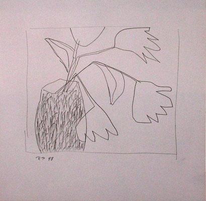 Tulpen, Bleistift auf Papier