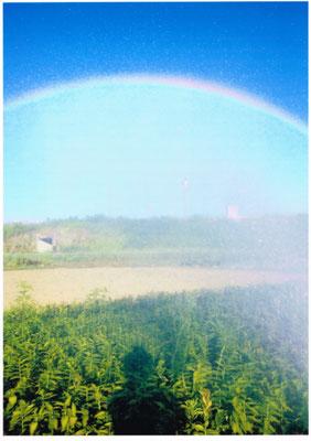 虹を作る人