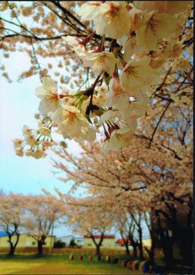 山辺里の春