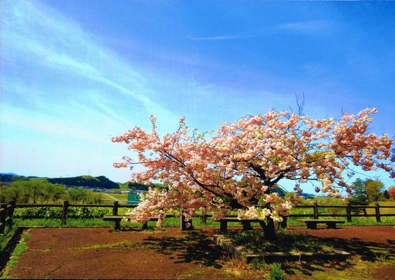 遅咲きの春