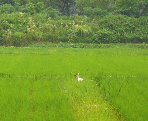 あふれる緑大賞「田でひと休み」