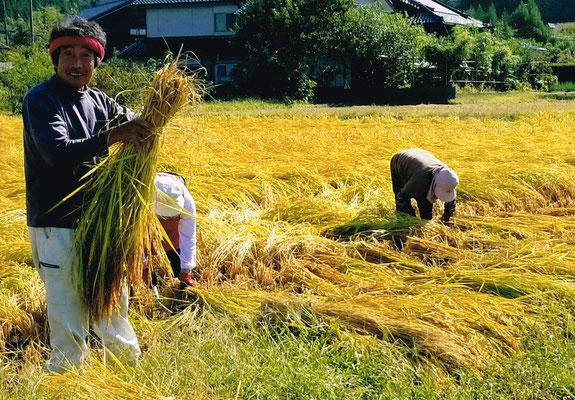昭和の3条刈り