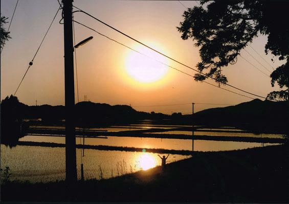 広がる水田