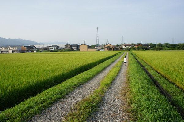 あふれる緑大賞「散歩道」
