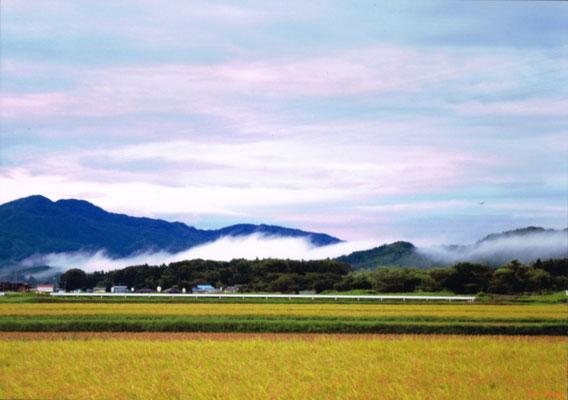 朝霧に鳶(とんび)