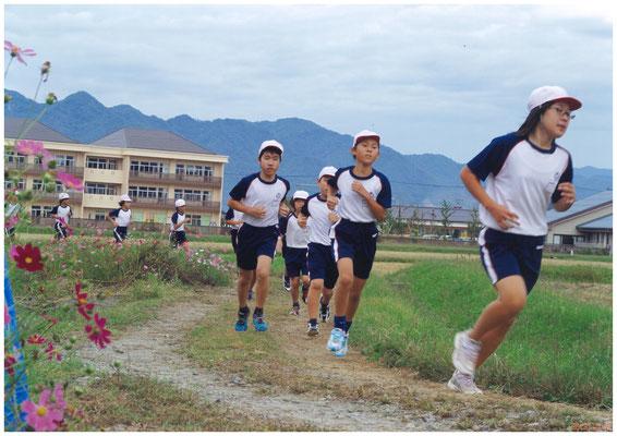 コスモスが揺れるマラソン日