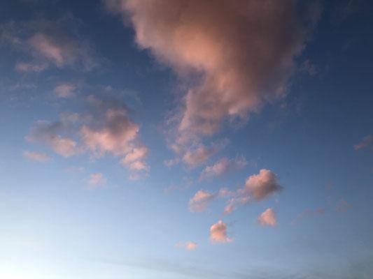 rosa Momente