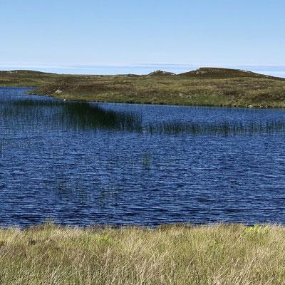 Traumhafte kleine Seen inmitten von Heidelandschaft (Lairg - Tongue).