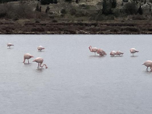 Vor unserer Haustüre: Flamingos im Januar, es ist so traumhaft!