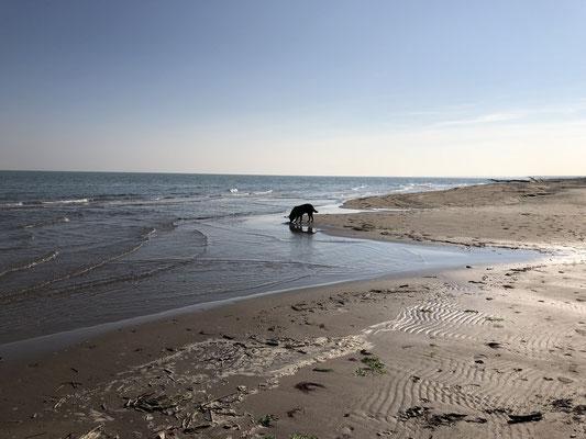 Rosolina Mare ... im Winter ein Traum, wir haben den Strand für uns