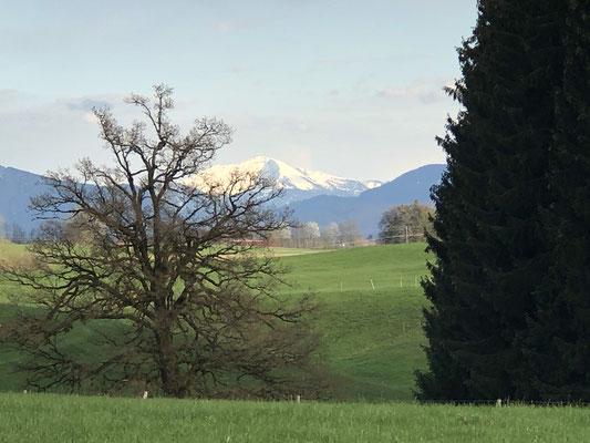 Unser Spaziergang, den Hügel hoch mit den Schneebergen im Hintergrund ... traumhaft.