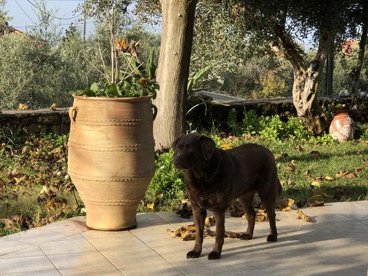 Coco bei ihrer Gartenwache!