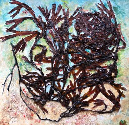 Mein walisisches Meer 3, Algen in Acryl auf Karton, 40 x 40 cm, Wales 06/19