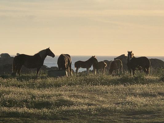 Unsere Pferdemammies mit ihre Fohlen, bei uns vor der Türe.