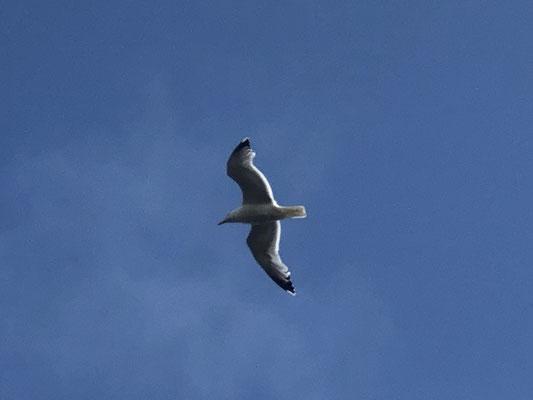 ... free as a bird!