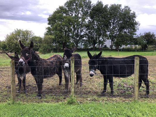 Unsere Nachbarn, Midnight, Bumble, Thomas und Coco!