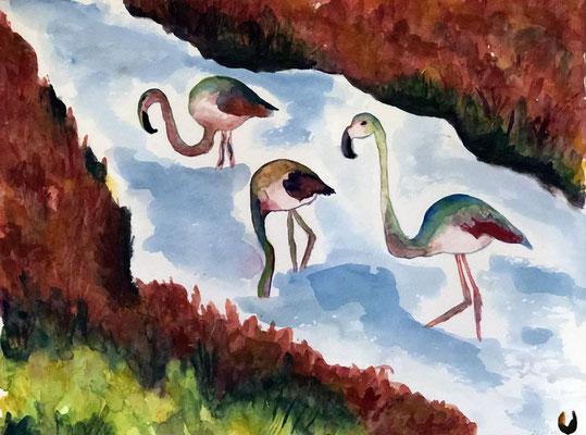 Flamingo Saline
