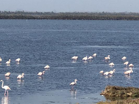 Flamingos... , es ist traumhaft