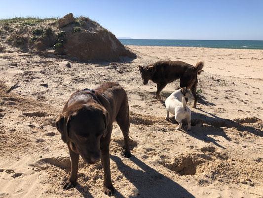 Coco, Bulma und ein weiterer Strandläufer