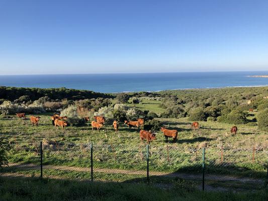 fast heimisch der Ausblick ... zumindest bis sind es auch Rinder und auch inmitten von Grün ...