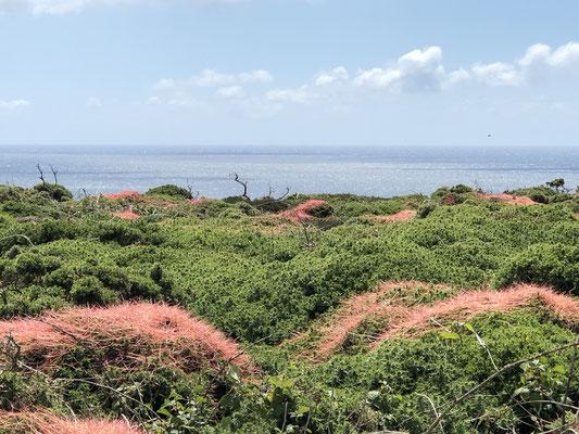 Ausblick vom Küstenweg.