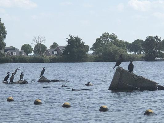Noch mehr Wasservögel, die Kormorane begleiten uns seid Beginn unserer Reise.