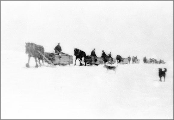 Transport de billots pour le sciage, Baie Ste-Claire