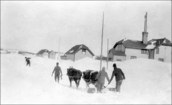 Déblaiement de la neige avec attelage de boeufs