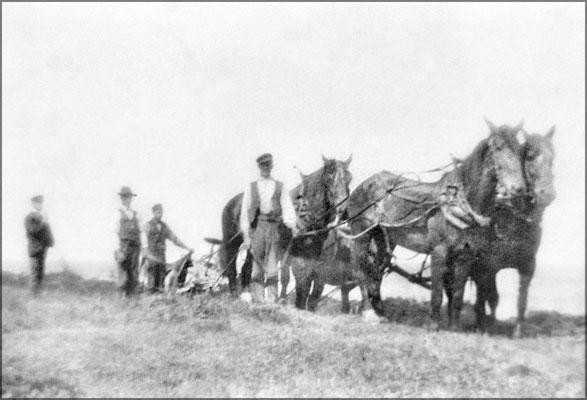 Travaux agricoles (labour) vers 1903