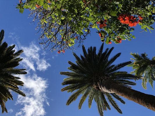 Parque Municipal García Sanabria