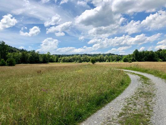 kurz vor Peißenberg wird der Ammer-Amper Radweg besonders grün