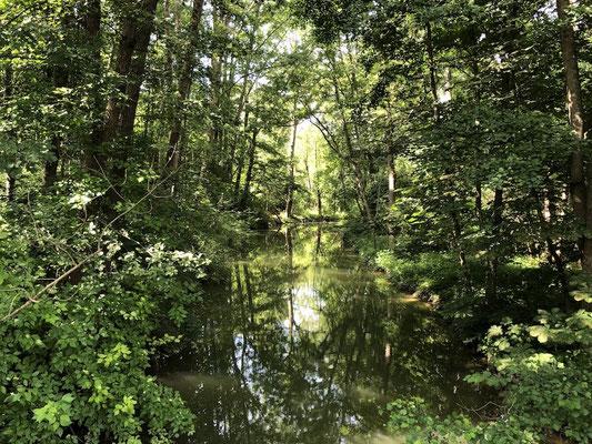 nur wenige Meter neben der Strecke gibt es zahlreiche Biotope