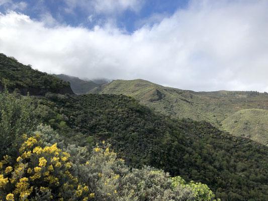 durchs Grüne in die Berge