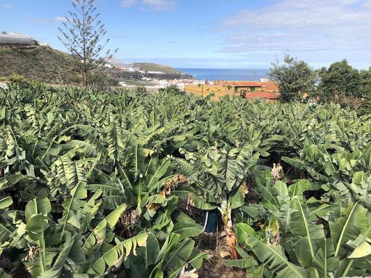 Nordküste von Gran Canaria