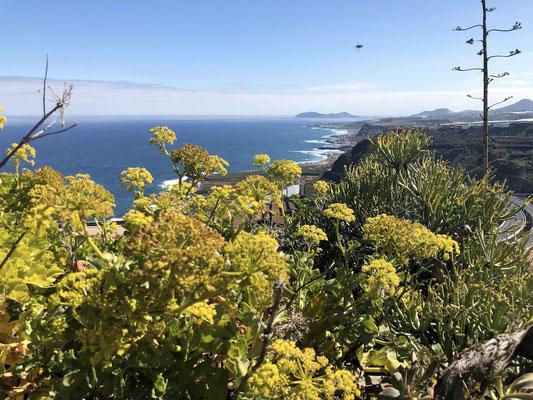 Blick auf die Nordküste von Gran Canaria