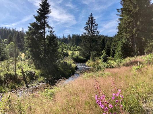 Bachlauf im Nationalpark