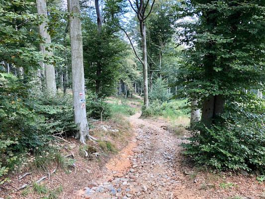 durch Buchenwälder nahe Finale Ligure