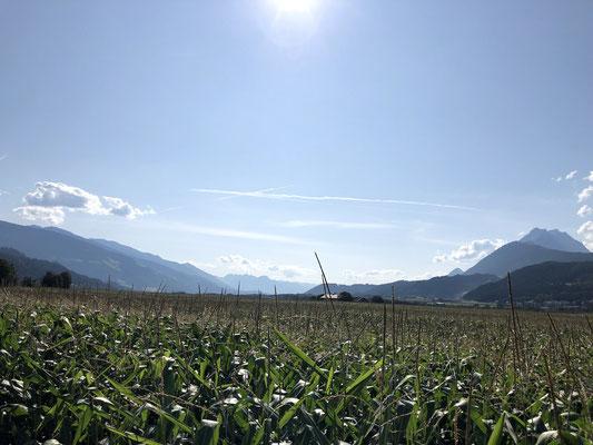 Maisfelder im Inntal