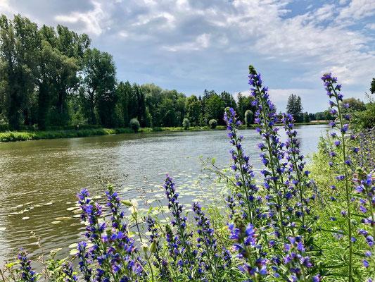 Flussidylle nahe Dachau auf dem Ammer-Amper Radweg