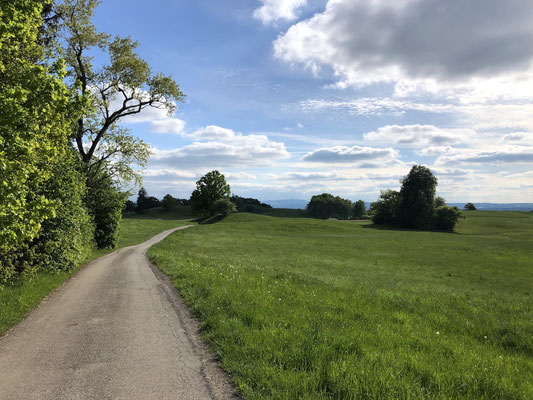 Trainingsrunde  im Frühling (Berghuhn)