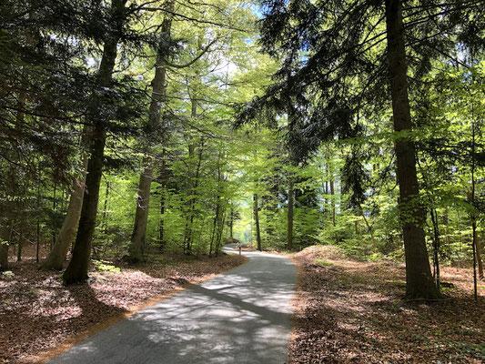 Alpenrand in Bayern (Berghuhn)