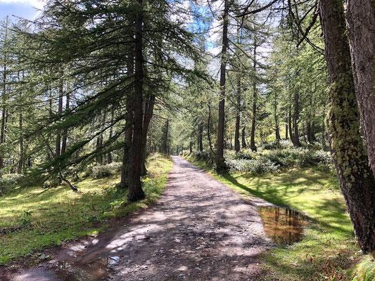 unterwegs im Lärchenwald