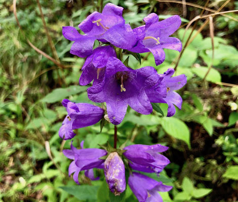 Blütenpracht am Wegesrand