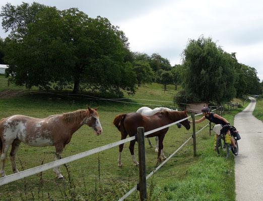 Judith mit Pferden